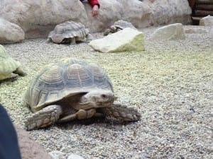 Zoo Wrocław Afrykarium